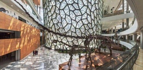 上海自然博物馆墙壁上的秘密