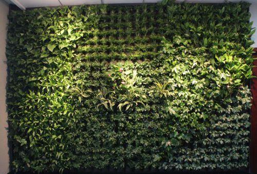 壁纸 成片种植 风景 花墙 景观 墙 植物 种植基地 桌面 500_339